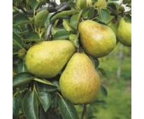 Poire Williams Bio 1kg - Mas Daussan