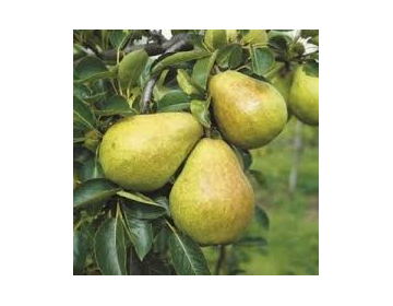 Poire Williams Bio 1kg