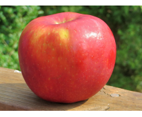 Pomme Breaburn Bio de Provence 1kg