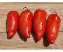Tomate Bio Andine Cornue de Provence 1kg