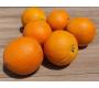 Orange Bio Navel 1kg